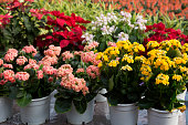 フレイミング・ケイ花の鍋、人工のカラフルな花々が並び、フラワーショップ、