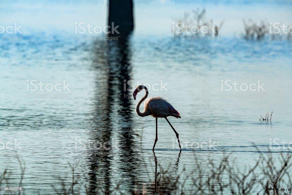 Flamingo Nakuru Gölü stok fotoğrafı