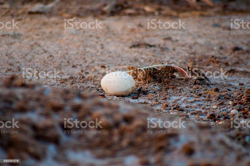 flamingo huevo - foto de stock
