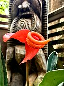 Natural orange weaver bird