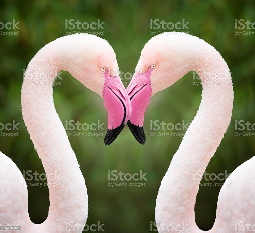 Flamingo coeur, amour - Photo