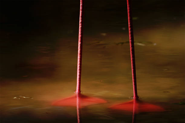 Flamingo Beine – Foto