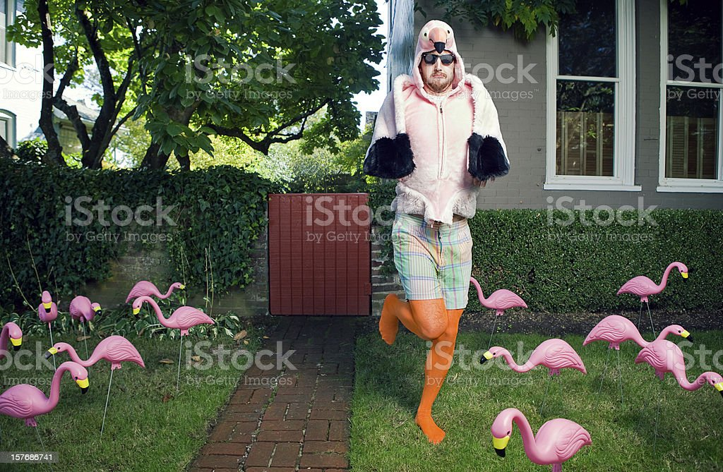 Flamingo Man Lawn stock photo