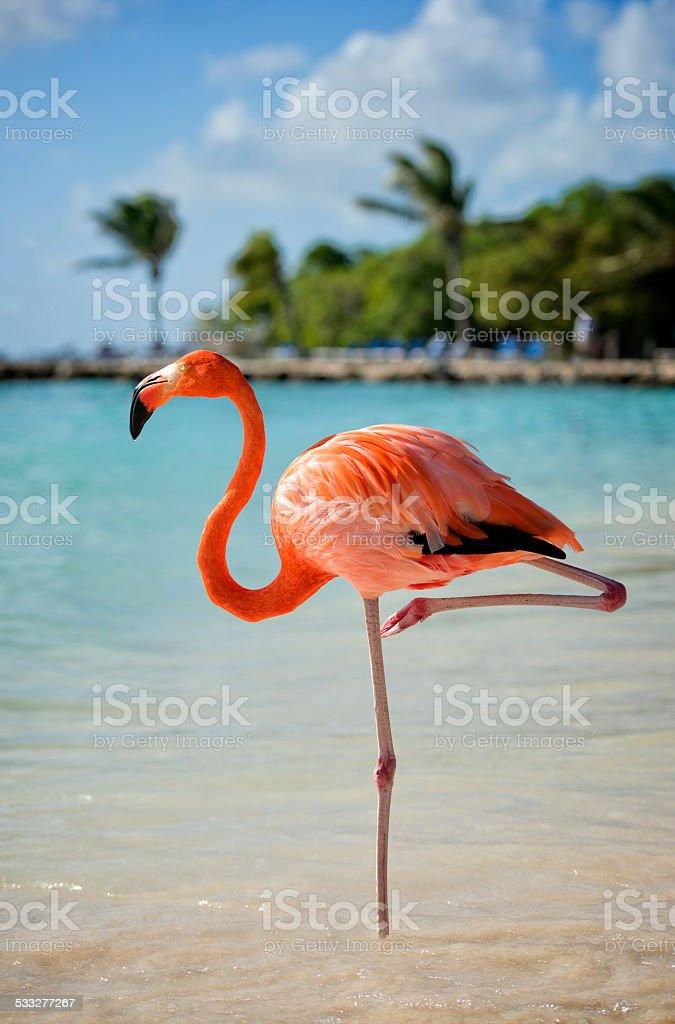 Flamingo on a Beach stock photo