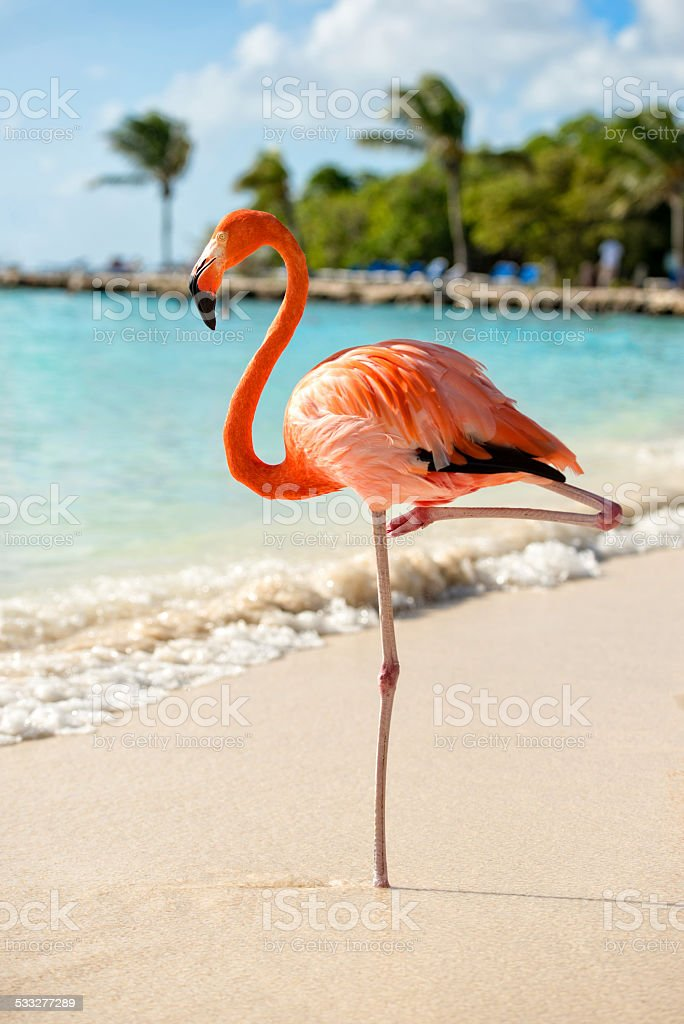 Flamingo on a Beach stock photo