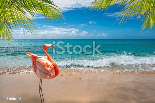 Bright picture with one pink flamingo bird standing on Aruba's white sand beach. Turquoise colored sea and blue sky in the backgound. Tropical swaving palm fronds in the corners of the image.