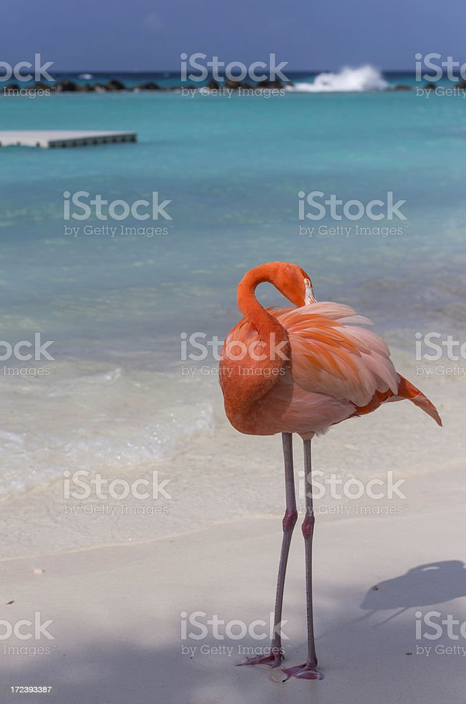 Flamingo on the Beach royalty-free stock photo