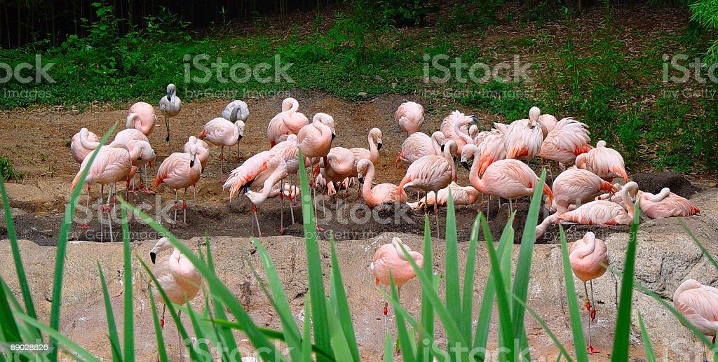 Flamingo Party royalty-free stock photo