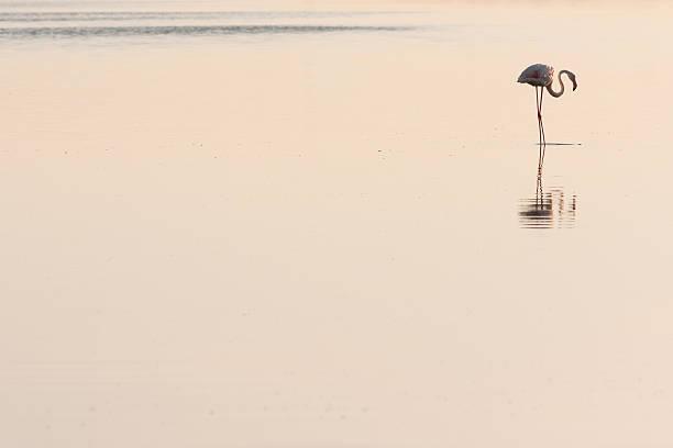 Perfil de Flamingo - foto de stock