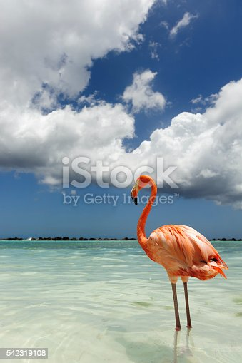 Flamingo standing in the turquoise sea