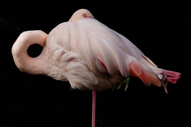 Ein Flamingo unter einen Blick – Foto