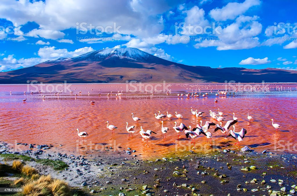 Flamingoes in Laguna Colorada , Uyuni, Bolivia stock photo