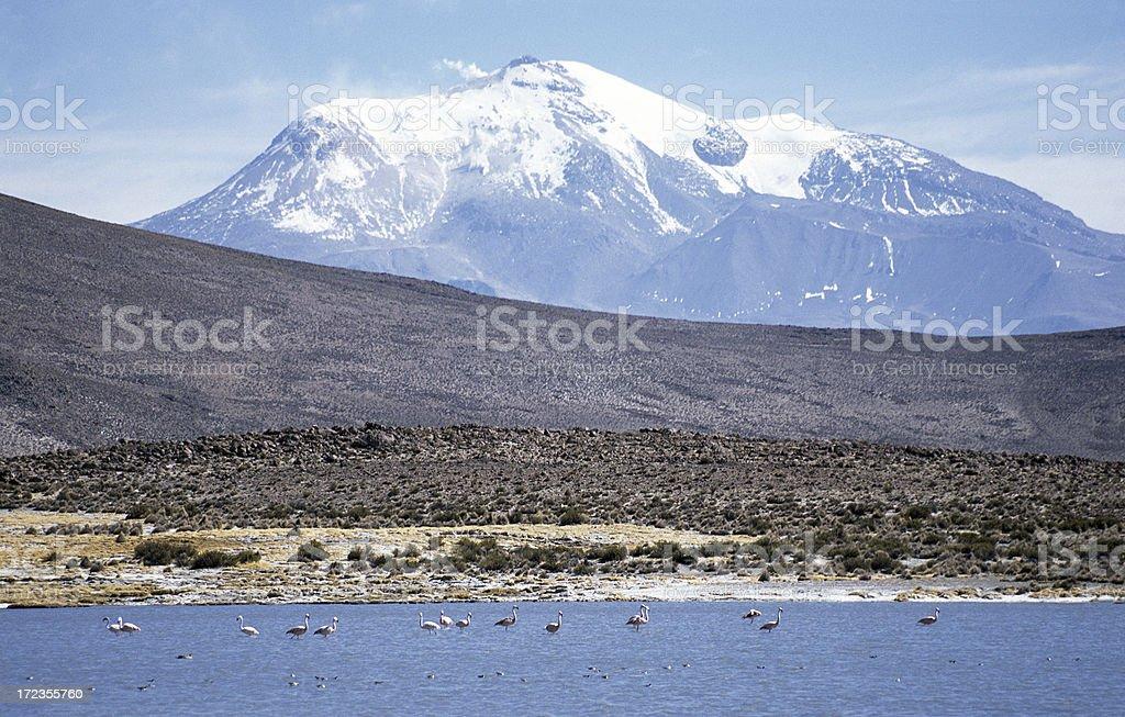 Flamingo, coronadas de nieve y al volcán foto de stock libre de derechos