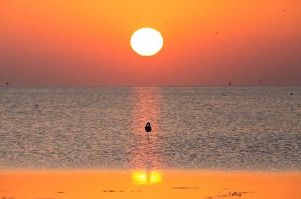 Flamingos are beautiful and gregarious wading birds stock photo