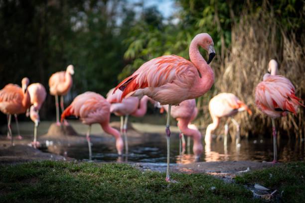 Flamingos at Frankfurt Zoo stock photo