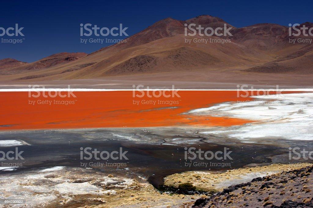 Flamingos at the colourful Laguna Colorada on the Altiplano high plateau, Bolivia stock photo