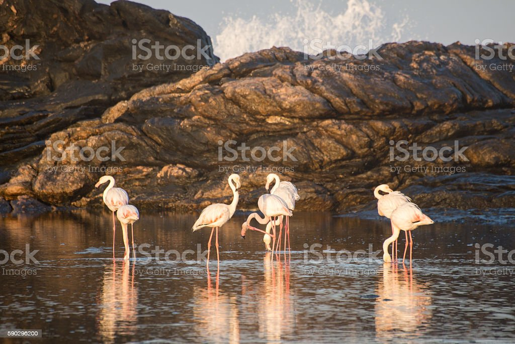 Flamingos by the ocean royaltyfri bildbanksbilder