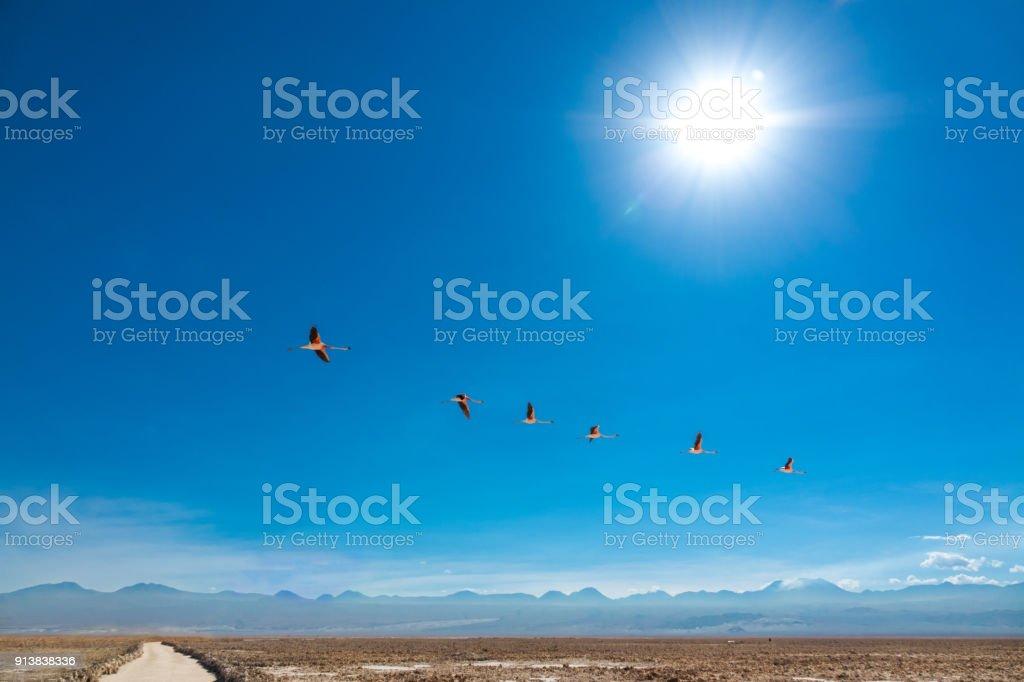 Flamingos fly in Chaxa lagoon salt lake, Atacama desert, Chile, South America stock photo