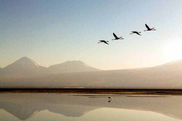 Flamingos flying over a lake in the desert of the  ... stock photo