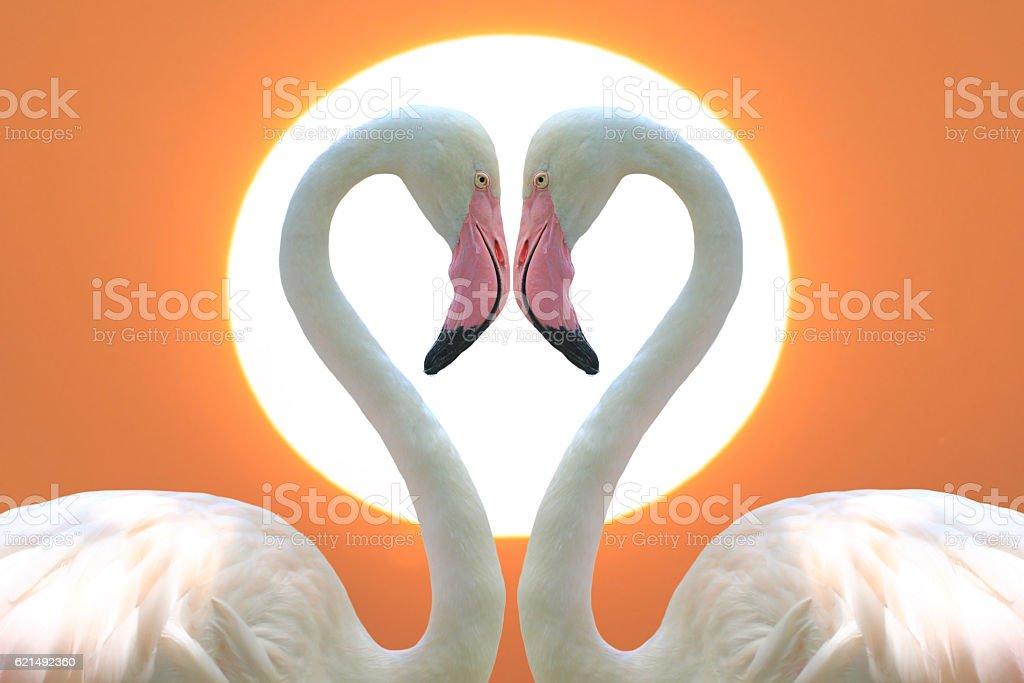 Flamants roses pour une forme de cœur photo libre de droits