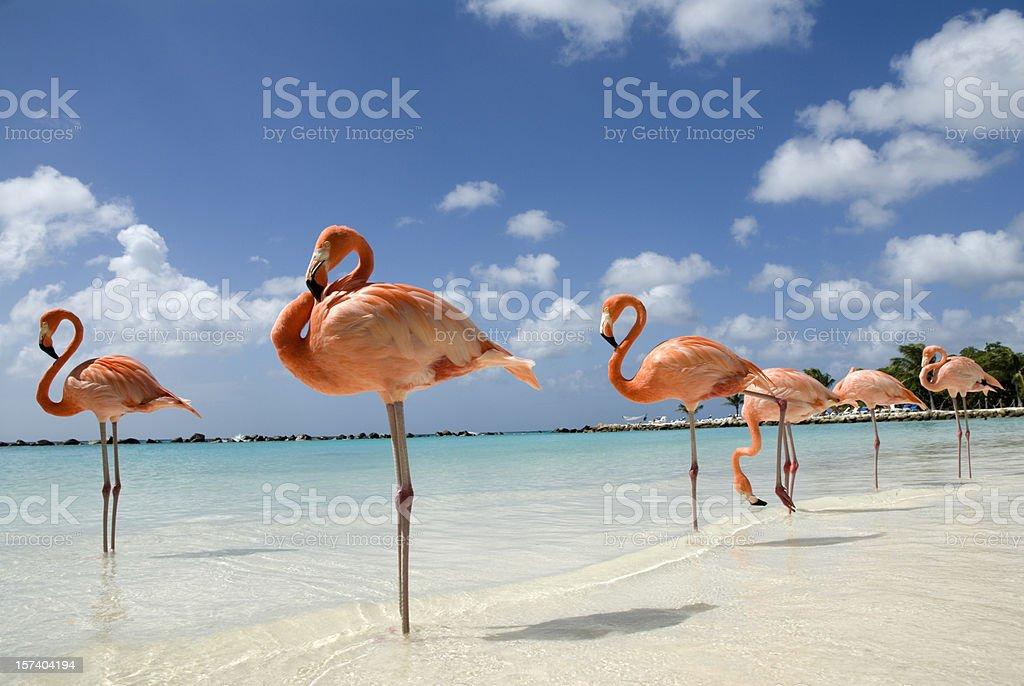 Flamingos on the Beach royalty-free stock photo