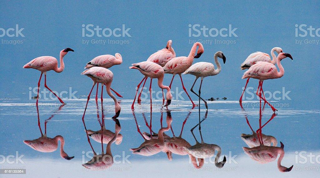 Flamingos on the lake. Kenya. Africa. stock photo