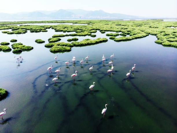 Flamingos Flamingos wildlife reserve stock pictures, royalty-free photos & images