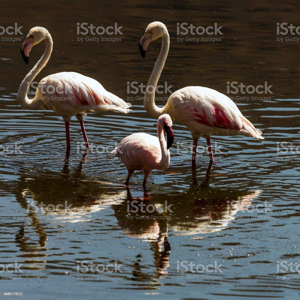 flamingolar stok fotoğrafı