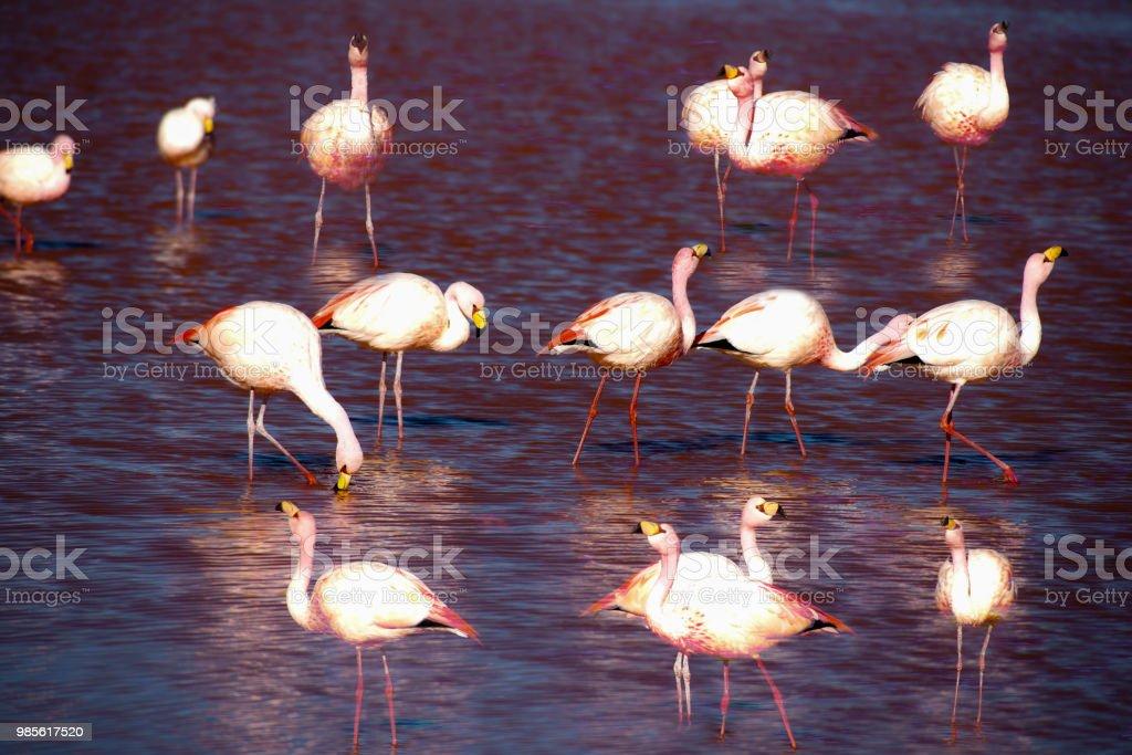 flamingos – Foto