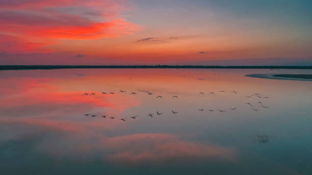 Flamingos reflecting in water at sunset stock photo