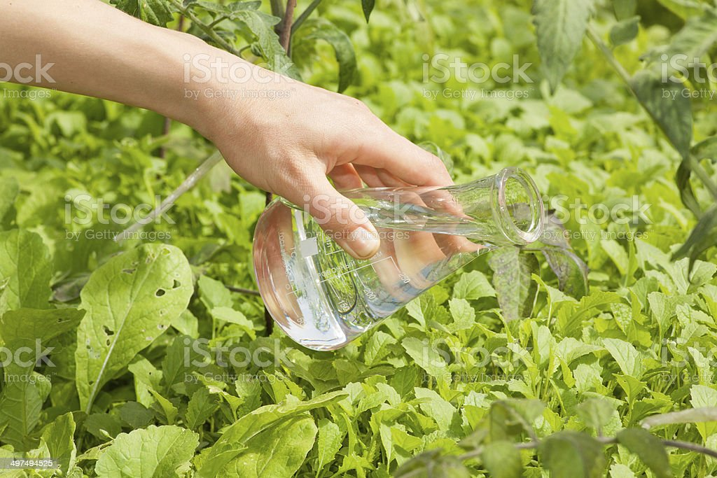 flask with clear water  and green plants royalty-free stock photo