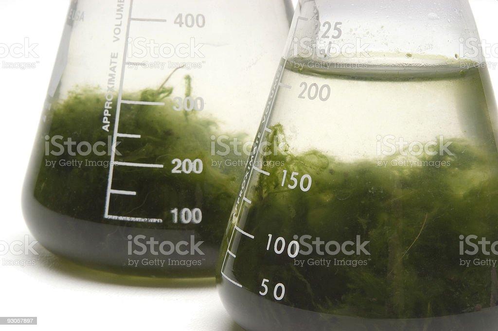 Gründung mit grünen Goo - Lizenzfrei Alge Stock-Foto