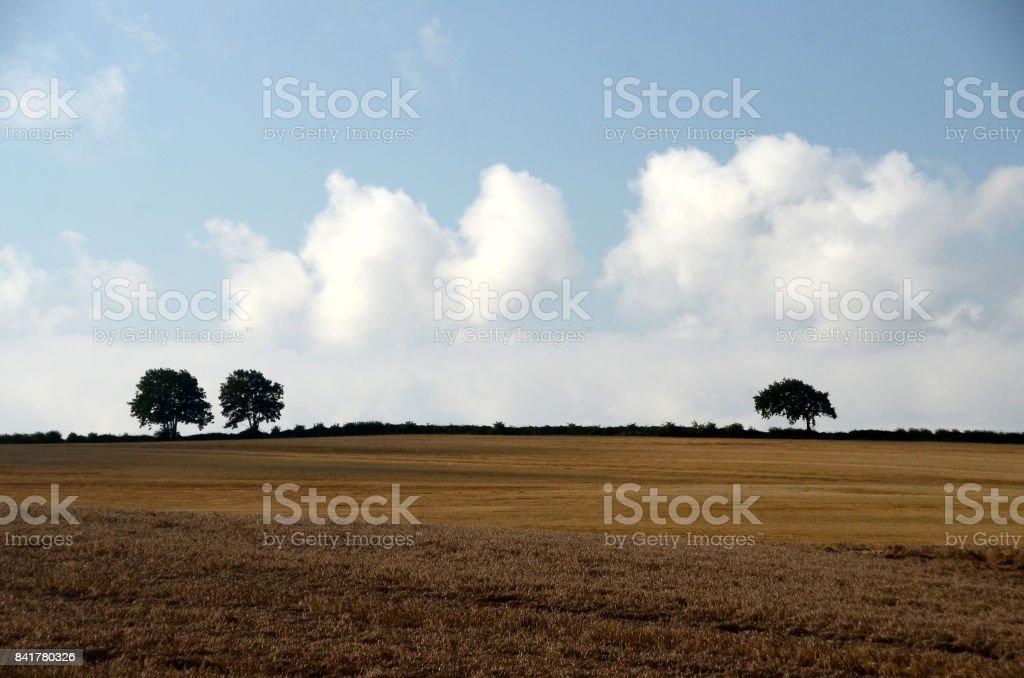 Plano terra - foto de acervo
