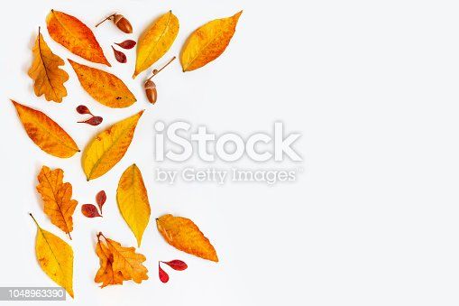 istock Flat lay Autumn composition with golden maple and oak leaves on white background. Autumn  frame. Top view. Copy space 1048963390