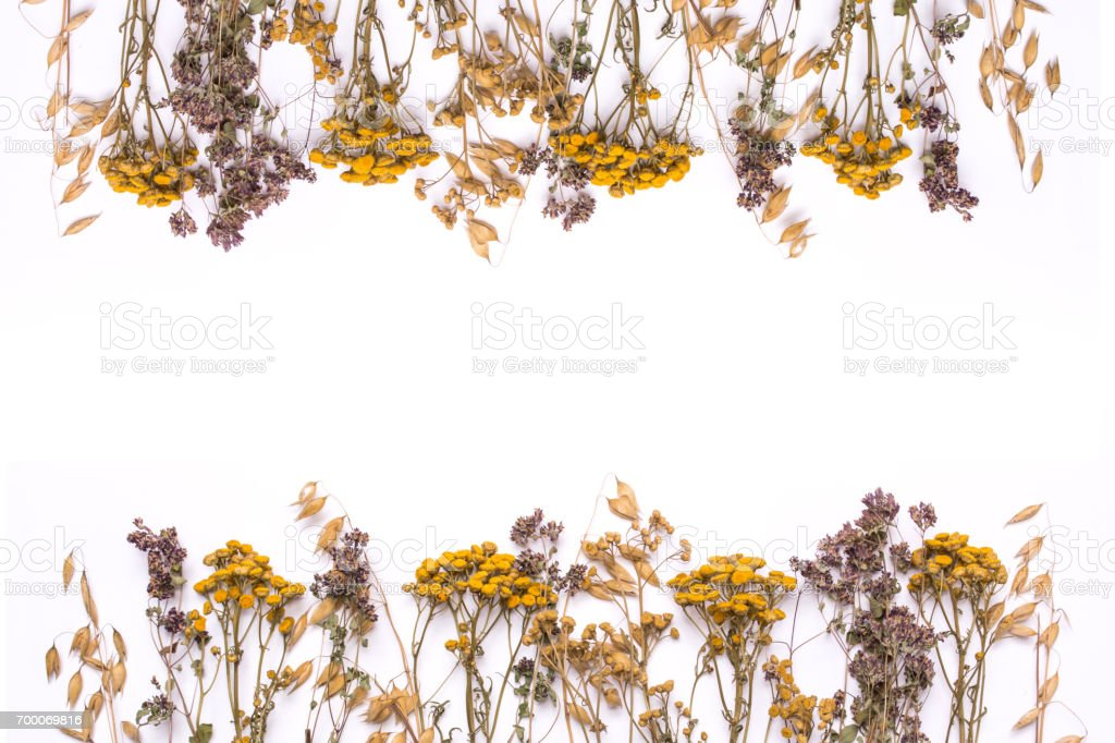 Flat lay border of dry branches of tansy and heather on a white background. stock photo