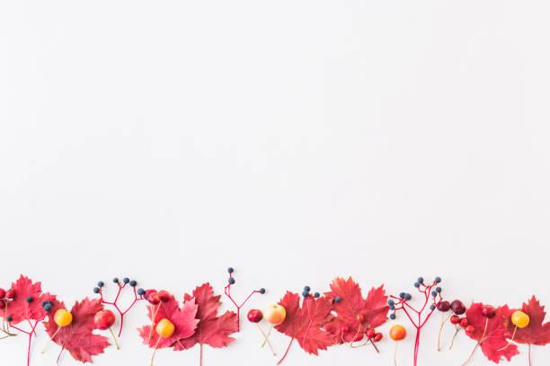 Flat lay border with colorful autumn leaves and berries on a white picture id1163788439?b=1&k=6&m=1163788439&s=612x612&w=0&h=ia5urc7tfwqujeloisumkld1g pyoz2qls4njitg9hi=