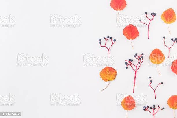 Flat lay border with colorful autumn leaves and berries on a white picture id1164754463?b=1&k=6&m=1164754463&s=612x612&h= kfhi7rjltctozzkx3n9fjnikhcoe9ulnp4xqou7xpe=