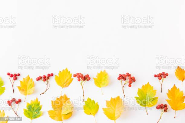 Flat lay border with colorful autumn leaves and berries on a white picture id1167051812?b=1&k=6&m=1167051812&s=612x612&h=u4aspsvgibo3zsj 4g5rynvhgfipwutnu93pzc8un6y=