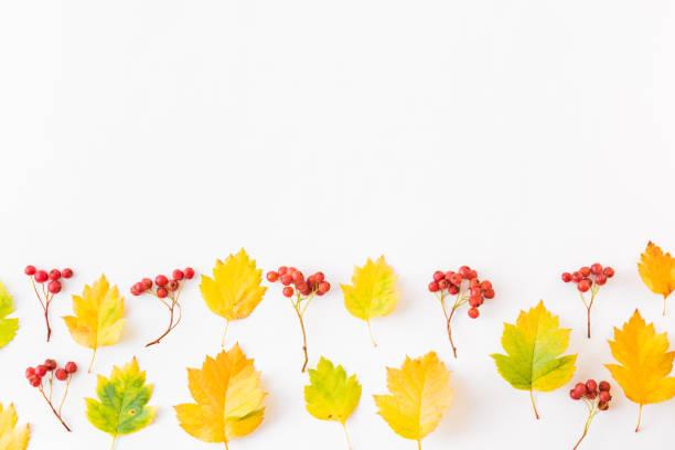 Flat lay border with colorful autumn leaves and berries on a white picture id1167051812?b=1&k=6&m=1167051812&s=612x612&w=0&h=d0phosd28xm7ohayqjiihtuuyjtrj1xdnlevl7a3rkm=