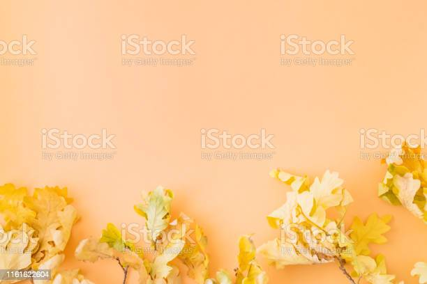 Flat lay border with colorful autumn leaves on a colored background picture id1161622604?b=1&k=6&m=1161622604&s=612x612&h=xl7k4czti8gnce4b6rxbg0xf8vlplq35pyxsejrvchk=
