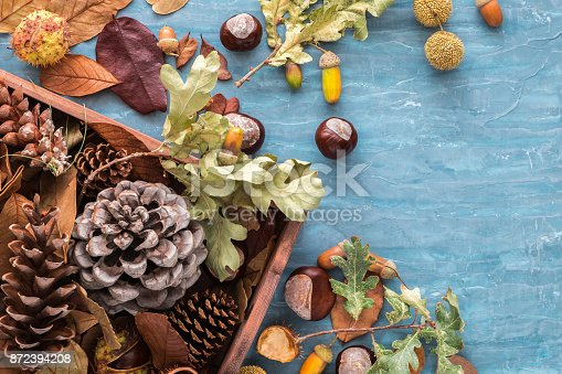 istock Flat lay composition for autumn holidays greeting cards. Pine cones, oak branches, acorns, leaves, chestnuts in a wooden box on the blue textured background. Top view. 872394208