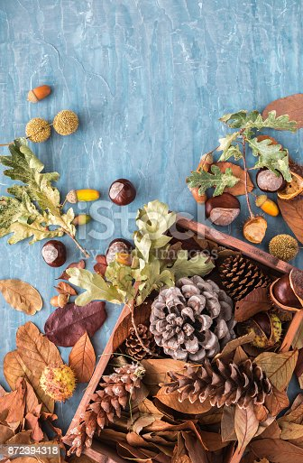 istock Flat lay composition for autumn holidays greeting cards. Pine cones, oak branches, acorns, leaves, chestnuts in a wooden box on the blue textured background. Top view. 872394318