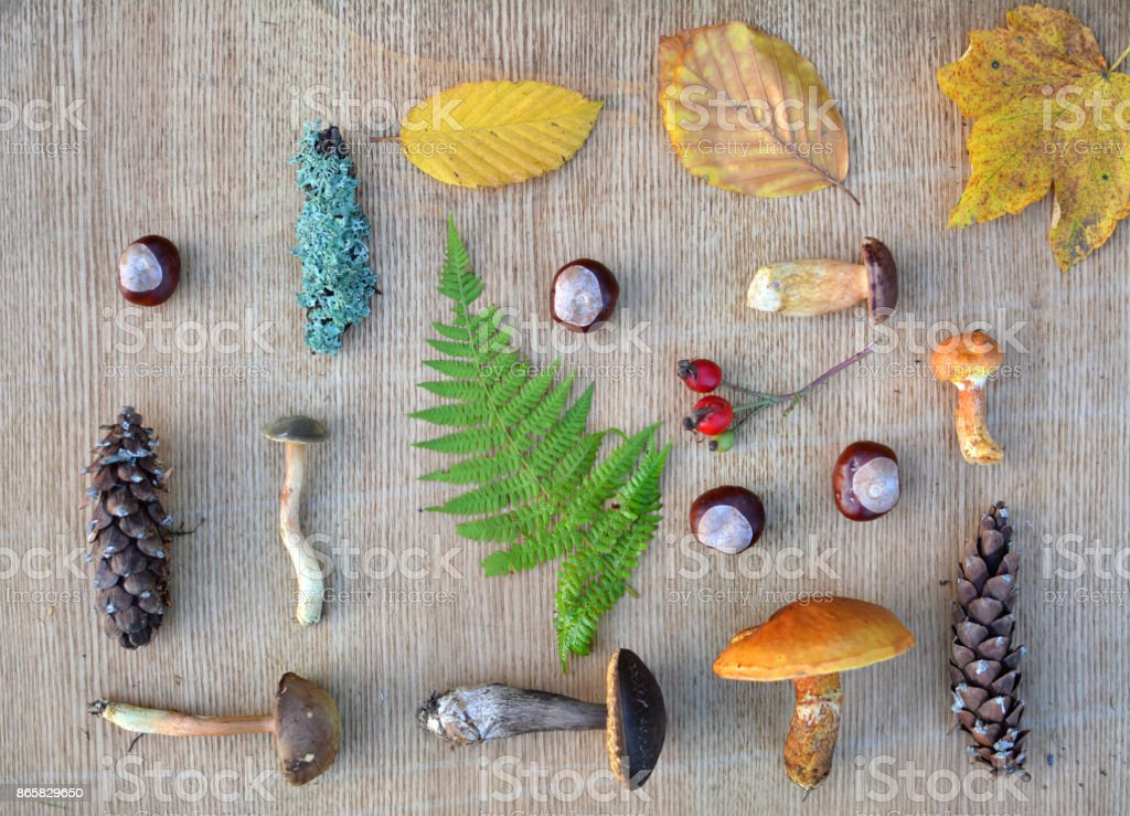 Flat lay composition of edible forest mushrooms and leaves stock photo