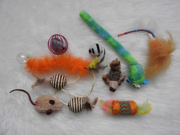 Flat lay composition with accessories for dog and cat on wooden pet picture id1142615785?b=1&k=6&m=1142615785&s=612x612&w=0&h=xcdgfu9cuocky12rgin7tieka44hrnxfj4zajogoxz8=