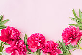 istock Flat lay composition with red peonies and green leaves on a pink background 1161010980
