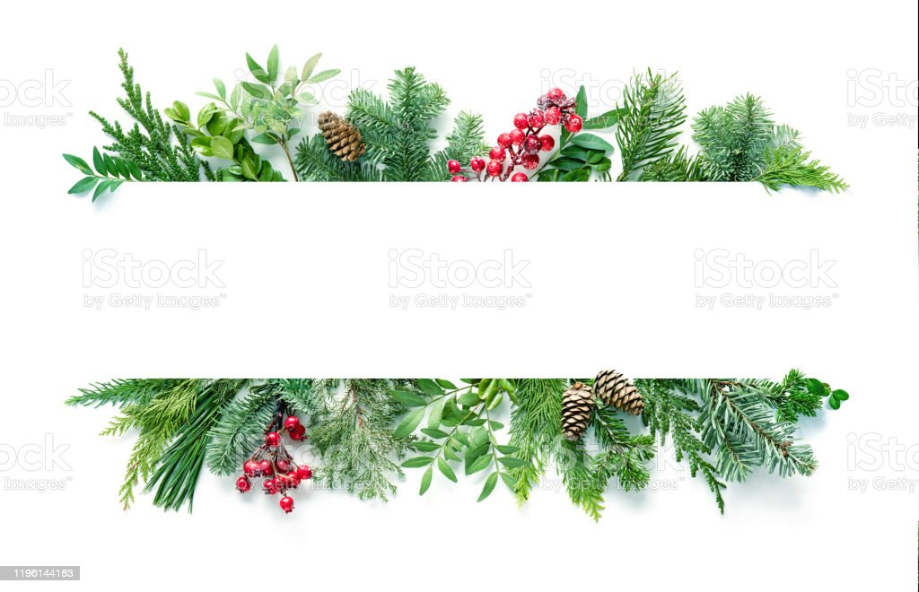 Platt Lay sammansättning med vinter Gran grenar, koner, järnek isolerad på vit bakgrund - Royaltyfri Blomma Bildbanksbilder