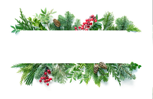 Flat lay composition with winter fir branches, cones, holly isolated on white background