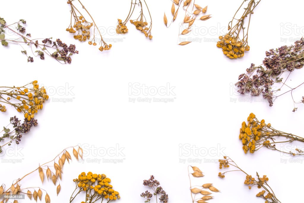 Flat lay frame. Dry branches of tansy and heather on a white background. stock photo
