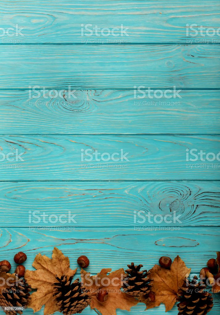 Flat lay frame of autumn leaves, cones and nuts on a wooden background of azure color. stock photo