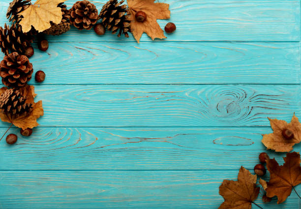 flat lay frame of autumn leaves, cones and nuts on a wooden background of azure color. - september stock photos and pictures